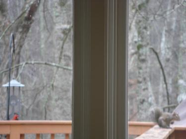 RedBirdMeetSquirrel.jpg